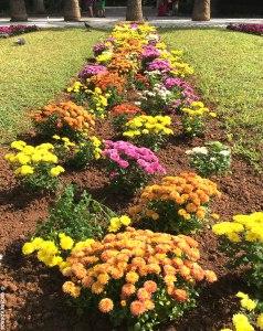 Royal Gardens flowers