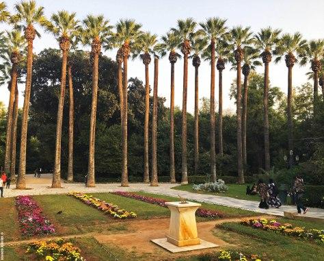 Royal Gardens palm